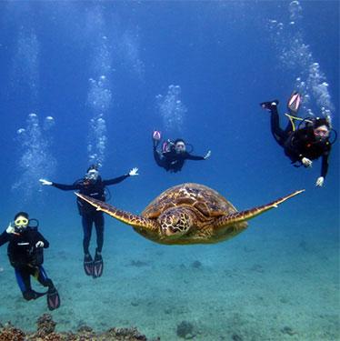 海亀と泳ぐハワイの体験ダイビングツアー
