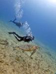 ハワイで海亀とスキューバダイビング