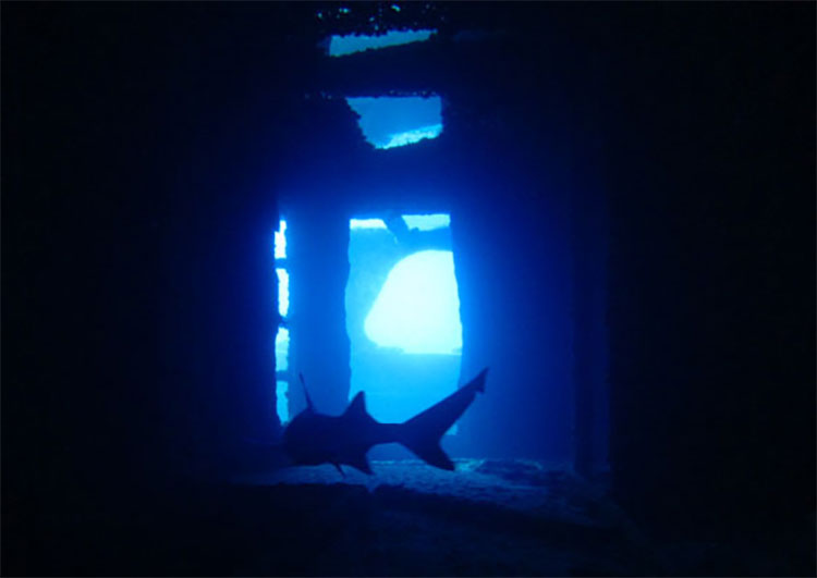ハワイの巨大な沈没船ダイビング・シータイガー