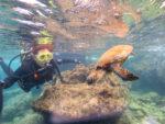 フレンドリーな海亀