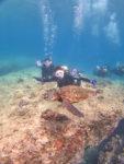 ハワイでウミガメとダイビング