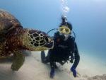海亀に急接近
