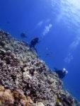 真っ青なハワイの海でダイビング