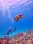 海亀とダイバー