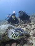 ハワイで海亀とダイビング