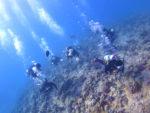 サンゴの上を潜る