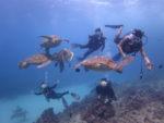 海亀三昧のハワイダイビング