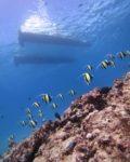 ハワイの真っ青な海でスキューバダイビング