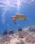 海亀と泳ぐハワイのスキューバダイビング