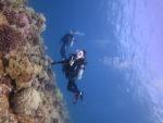 真っ青な海で体験ダイビングツアー